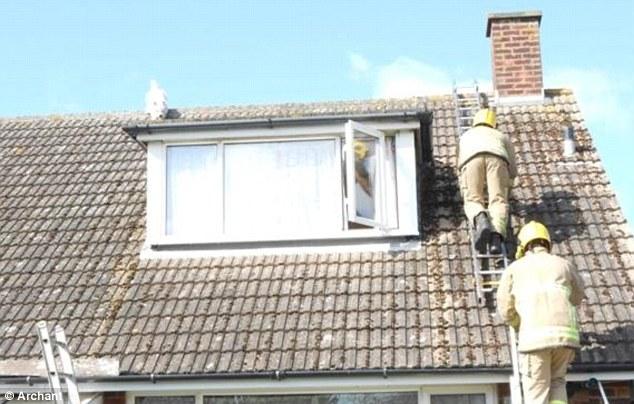 Bombeiros subiram no telhado para resgatar o cão. (Foto: Reprodução / Daily Mail uk)