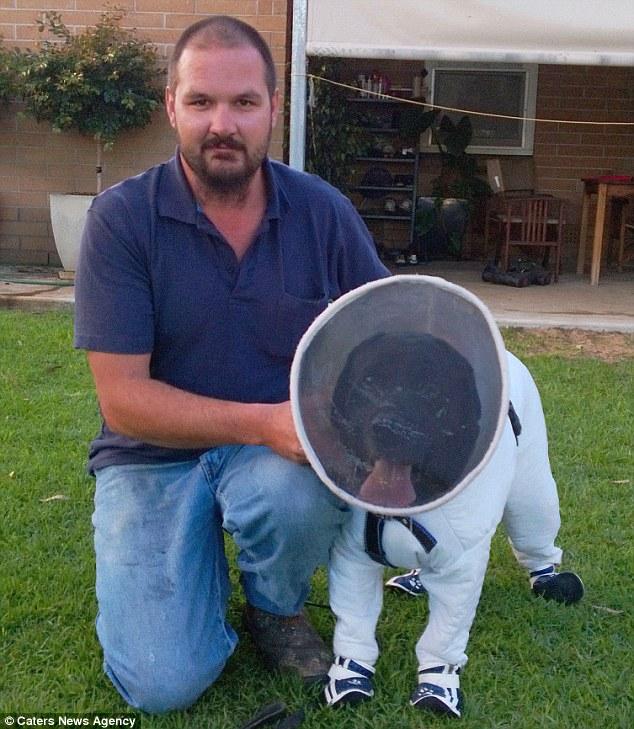 Josh Kennet treinou seu labrador Bazz para detectar doença em abelhas. (Foto: Reprodução / Daily Mail uk)