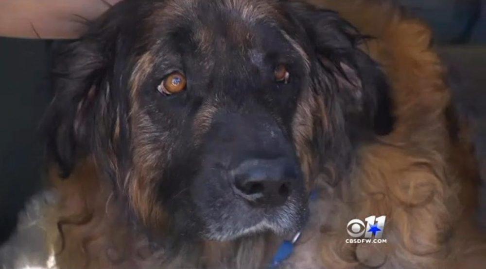 Cachorro era mantido preso dentro de gaiola. (Foto: Reprodução / NY Daily News)