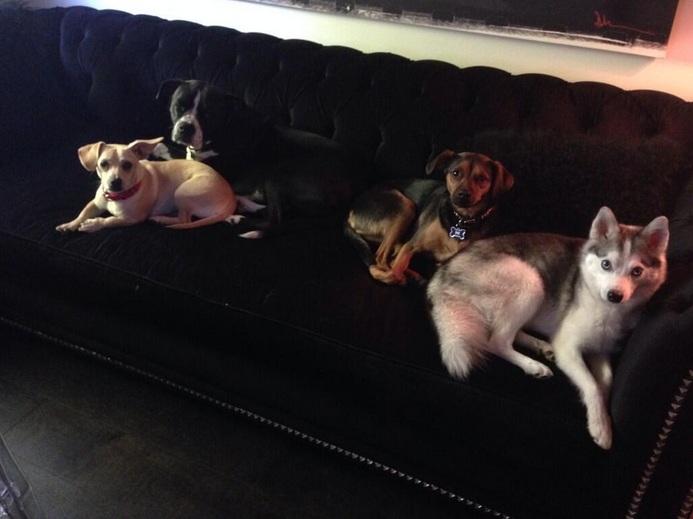 Foto antiga: Bean, Mary Jane, Happy e Floyd. (Foto: Reprodução / Twitter)