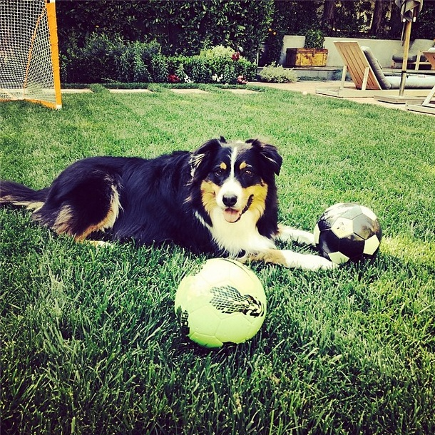 O cão Dubois. (Foto: Reprodução / Instagram)