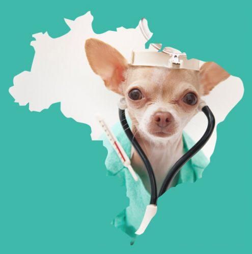 Banco de dados do Portal do Dog reúne Hospitais Veterinários Universitários e clínicas privadas que atendem a preços populares.