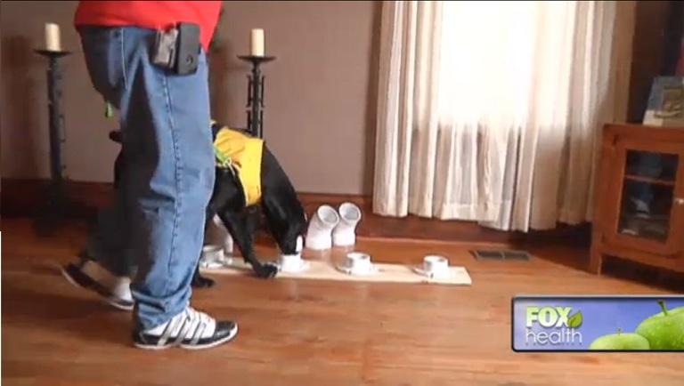 Treino do cão Austin com amostras de pacientes com níveis variados de açúcar no sangue. (Foto: Reprodução / Fox News)