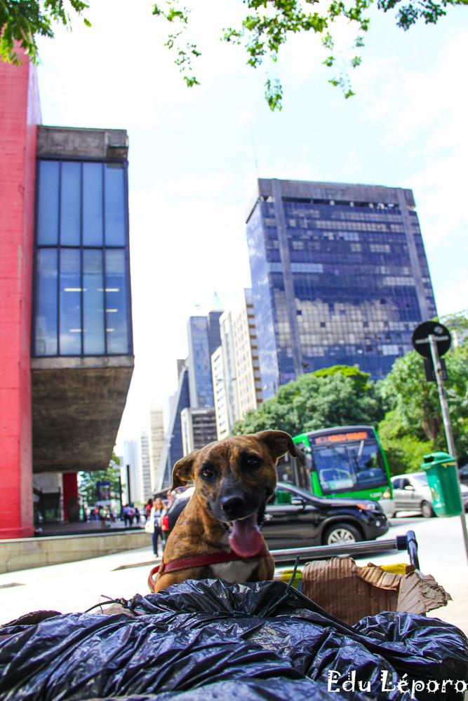 edu-leporo-familia-paulista-moradores-rua-caes-serie-03