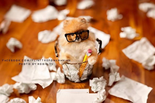 flint-lulu-pomerania-cachorro-fotografias-07