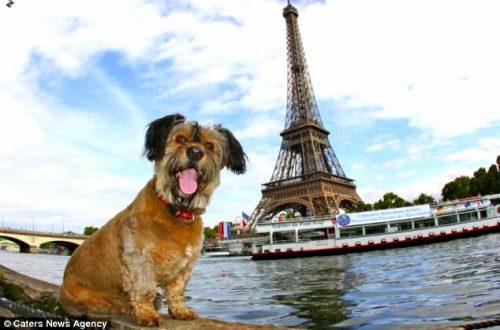 Oscar foi resgatado e ficou famoso ao visitar diversos países. Foto: Reprodução / Caters