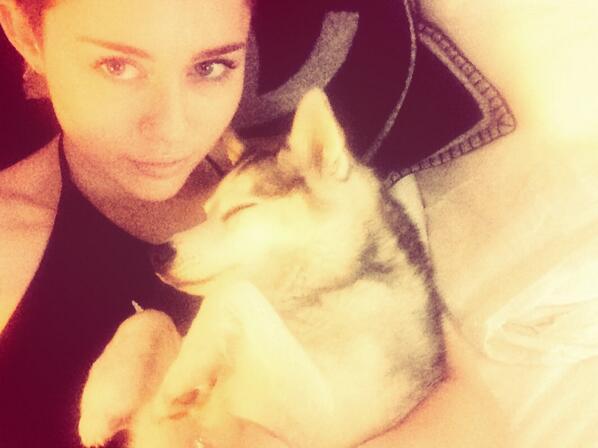 Miley Cyrus publicou uma foto com o cachorro Floyd. (Foto: Reprodução / Twitter)