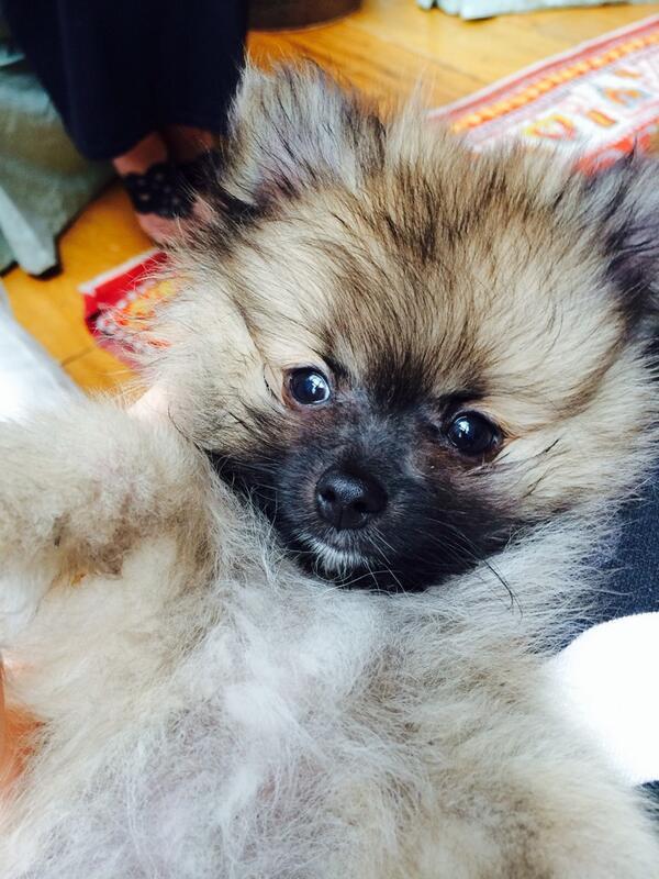Miley Cyrus ganhou um novo cachorrinho de sua mãe. (Foto: Reprodução / Twitter)
