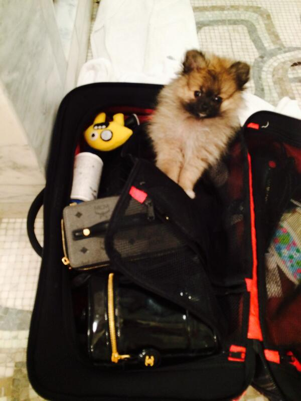 O cachorrinho Moonie está ajudando Miley a superar sua perda. (Foto: Reprodução / Twitter)