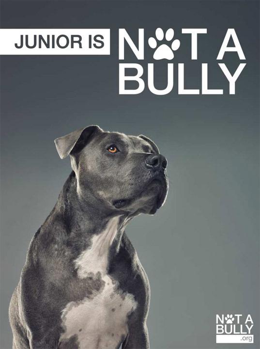 pit-bull-notabully-projeto-fotografia-04