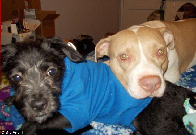 Cher recebe bem todos os cachorros que chegam na ong. (Foto: Reprodução / Daily Mail uk)