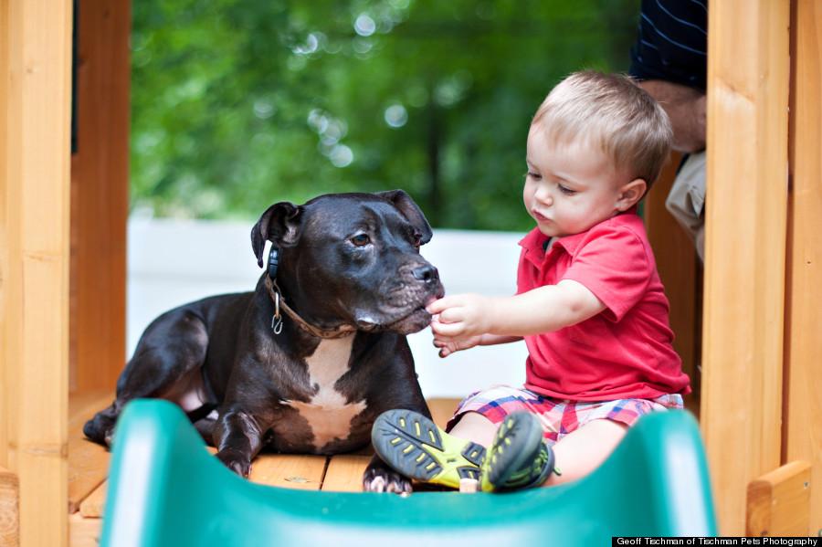 O cachorro Cherry Garcia foi adotado em 2010. (Foto: Reprodução / Huffington Post)