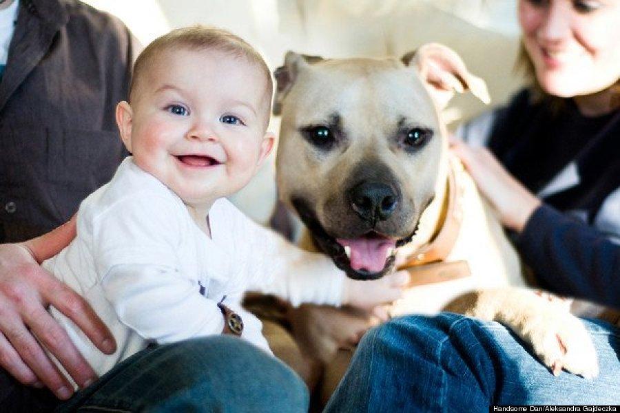 Handsome Dan é tão carinhoso que fica tranquilamente ao lado de um bebê. (Foto: Reprodução / Huffington Post)