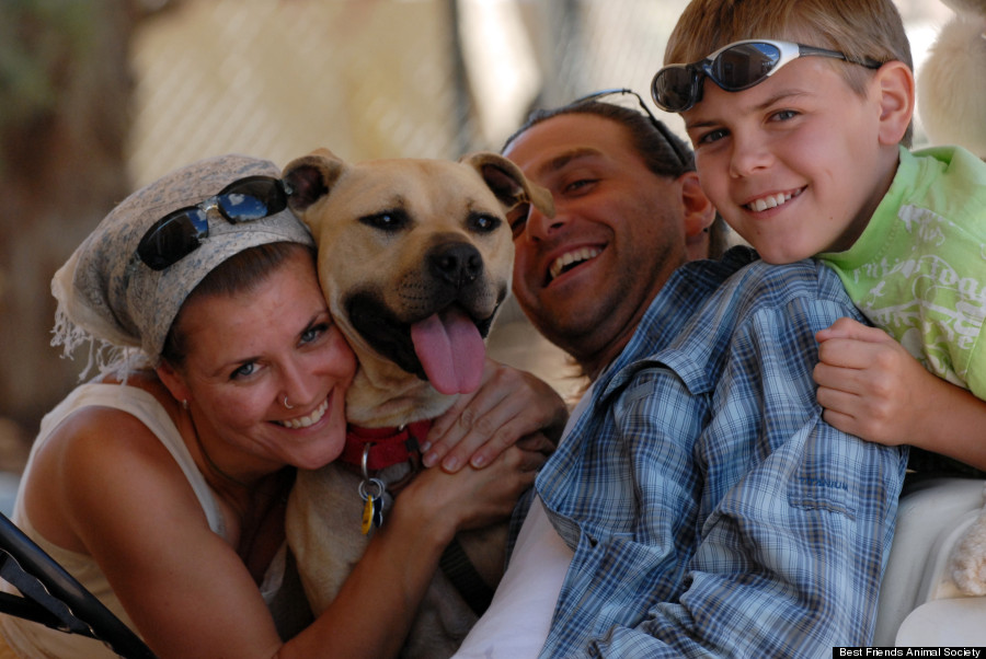 O cachorro Handsome Dan foi adotado em 2009. (Foto: Reprodução / Huffington Post)