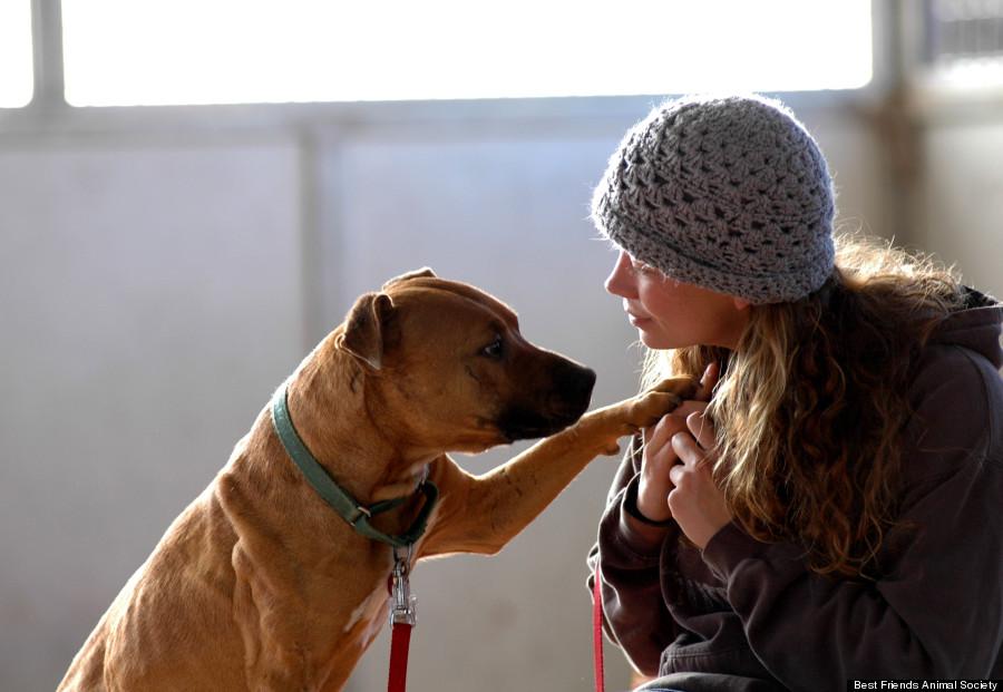 O cão Oscar foi adotado em 2012. (Foto: Reprodução / Huffington Post)