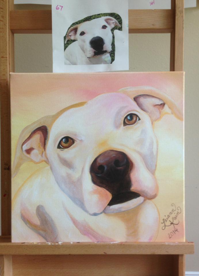 projeto-telas-cachorros-05
