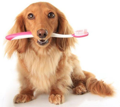 Cuide da saúde bucal do seu cachorro. (Foto: Reprodução / Google)