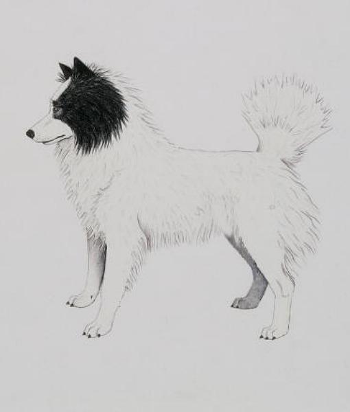 Tahltan Bear Dog (Foto: Reprodução / Pawnation)