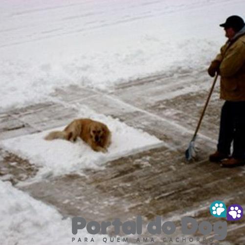 teimosos-cachorros-01