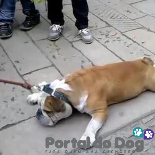 teimosos-cachorros-08