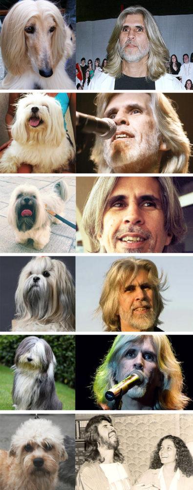 """Tumblr """"cachorrosqueparecemoswaldo"""". Foto: Reprodução/Tumblr. Montagem: Portal do Dog"""