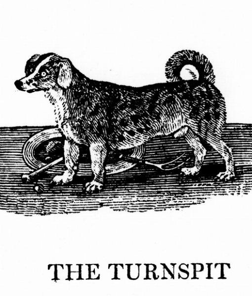 Turnspit Dog (Foto: Reprodução / Pawnation)