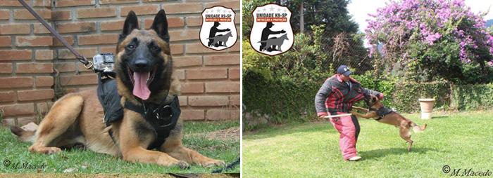 Uso de tecnologia nos treinos da Unidade K9. Foto: Reprodução/facebook. Montagem: Portal do Dog