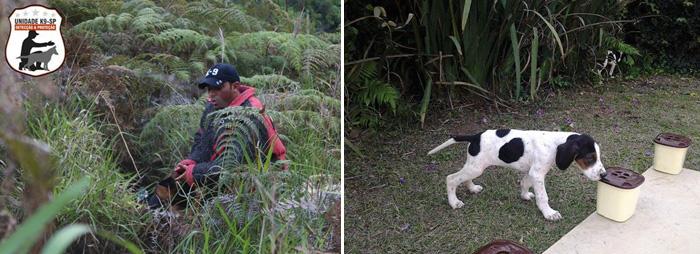 Esquerda: Busca e captura em mata. Direita: Formação dos cães começa cedo. Foto: Reprodução/Facebook. Montagem: Portal do Dog