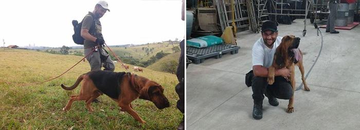 Bloodhounds. Foto: Reprodução/facebook. Montagem: Portal do Dog