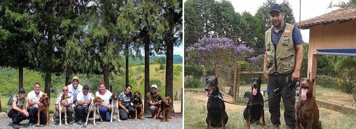 Direita: Treino de mantrailing em Sorocaba. Esquerda: Dobermans. Foto: Reprodução/facebook. Montagem: Portal do Dog