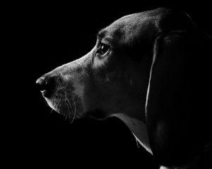 Cachorros enxergam no escuro: mito ou verdade? (Foto: Reprodução / Google)