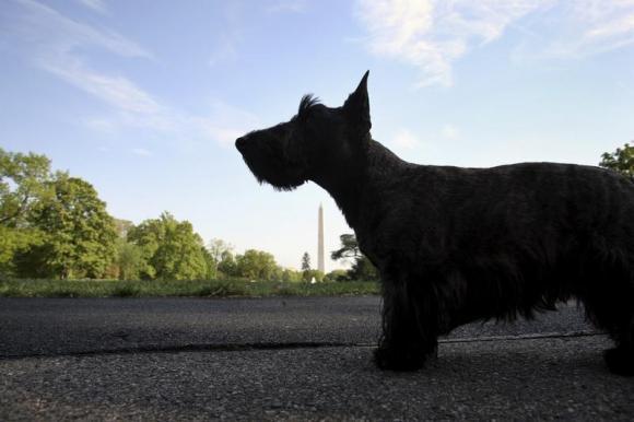 A cachorra Miss Beazley esperando a chegada do presidente em 2007. (Foto: Reprodução / Reuters)