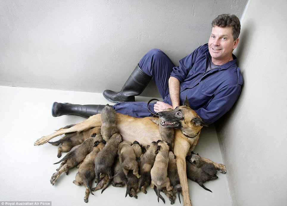 A cachorra militar Osha teve 17 filhotes. (Foto: Reprodução / Daily Mail UK)