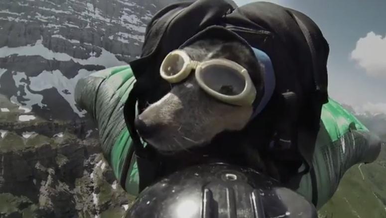 A cachorra Whisper se tornou a primeira do mundo a praticar wingsuit base jump. (Foto: Divulgação / Youtube / Dean Potter)