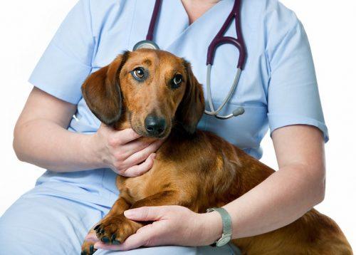 Aprenda a reduzir o estresse do seu cão durante a visita ao veterinário. (Foto: Reprodução / Google)