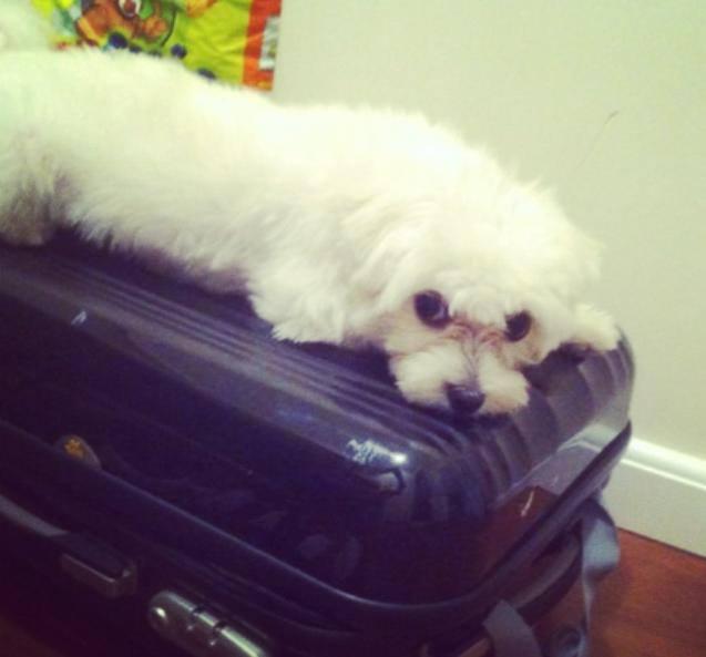 Pronto pra viajar! (Foto: Reprodução / Facebook)