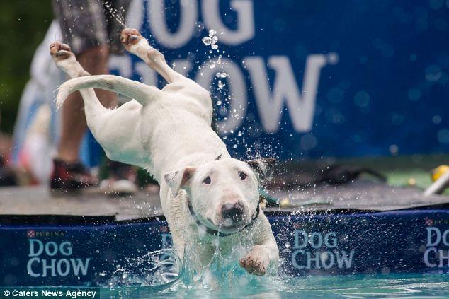 As habilidades dos cães na água foram avaliadas. (Foto: Reprodução / Daily Mail UK)