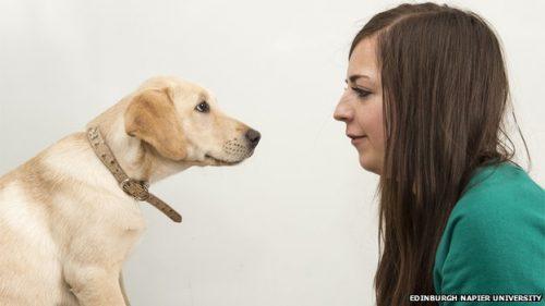 Cachorros vão fazer parte do processo seletivo do curso de veterinária da Edinburgh Napier University. (Foto: Reprodução / BBC UK)