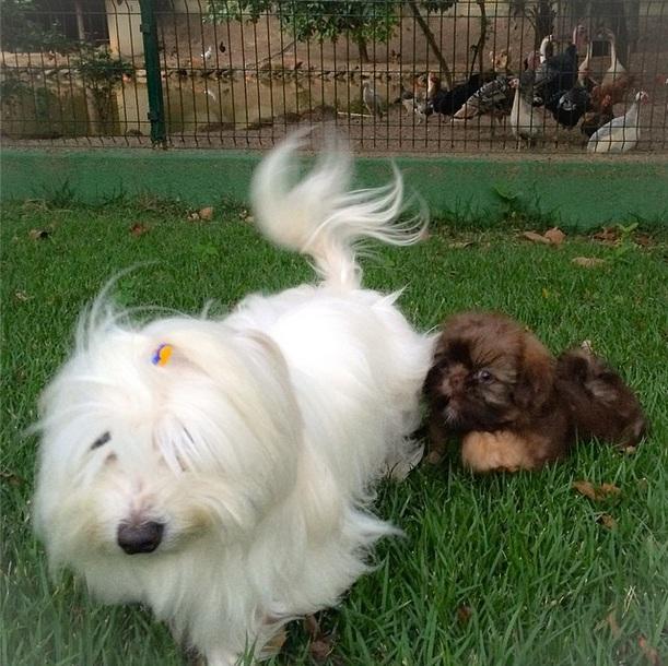 Os cães Flokinho e Paçoca. (Foto: Reprodução / Instagram)