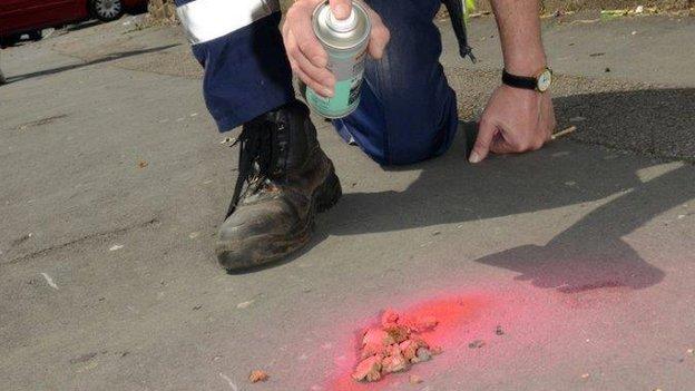 Cidade do País de Gales usa spray rosa nas fezes dos cães para conscientizar população. (Foto: Reprodução / BBC UK)