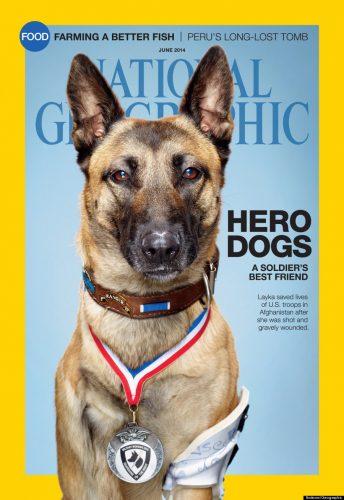Cães de guerra ganham destaque na edição de junho da National Geographic dos Estados Unidos. (Foto: Reprodução / Huffington Post)