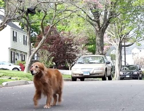 Cachorro passeia com a companhia de um drone. (Foto: Reprodução / vimeo / Jeff Myers)
