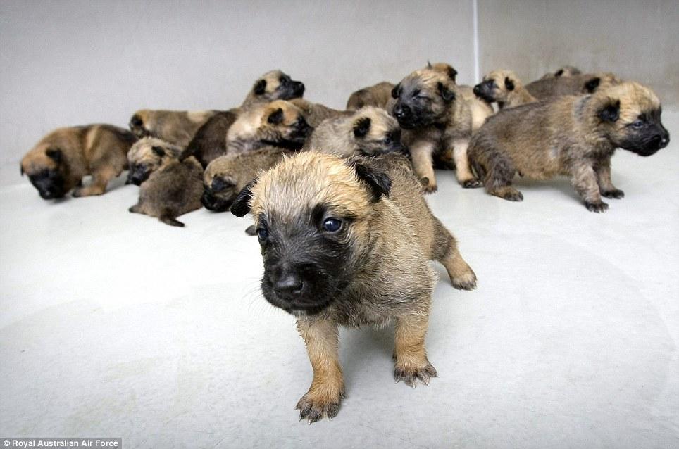 Os filhotes poderão ser adotados pela população. (Foto: Reprodução / Daily Mail UK)