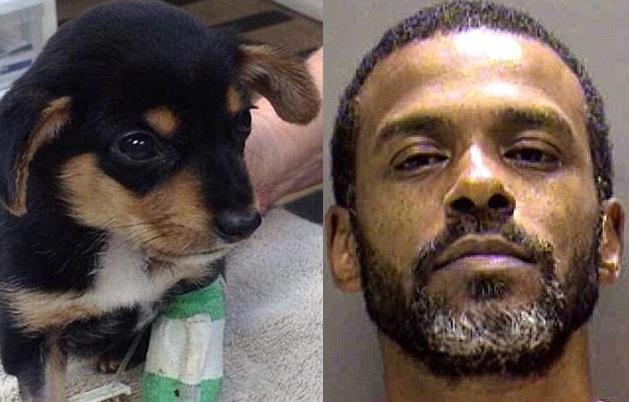 O cão foi adotado por uma nova família. E Ephrian Myles vai pagar pelo crime. (Foto: Reprodução / Daily Mail UK)