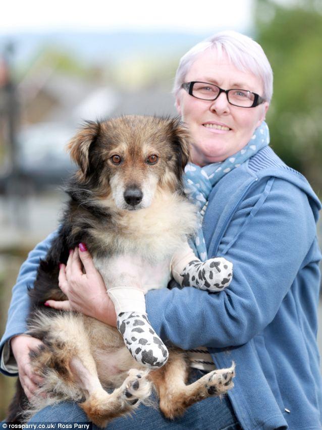 O cachorro Colin com Claire Revis. (Foto: Reprodução / Daily Mail)