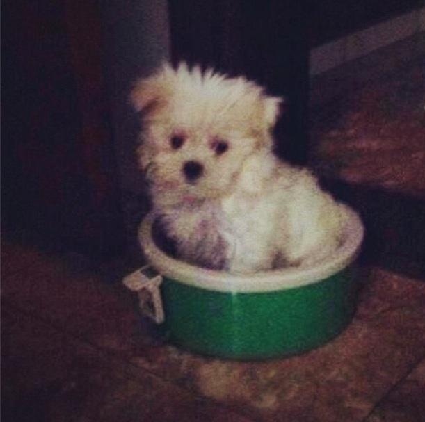 Cachorrinha de Reynaldo Gianecchini. (Foto: Reprodução / Instagram)