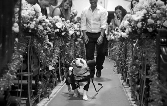 Panqueca foi eleito o melhor pet em casamentos. (Foto: Reprodução / Yes Wedding / Luiz Reiz)