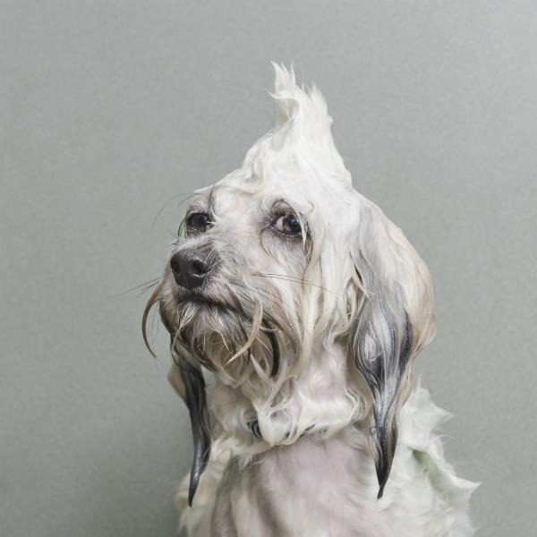 """O projeto """"Wet Dog"""" de Sophie Gamand foi premiado. (Foto: Divulgação / World Photo)"""