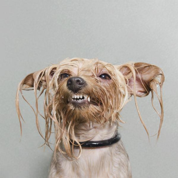 projeto-wet-dog-premiado-03