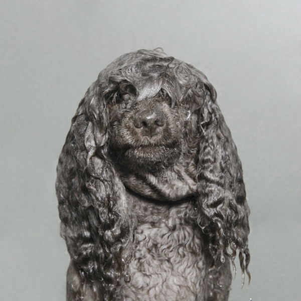 projeto-wet-dog-premiado-04